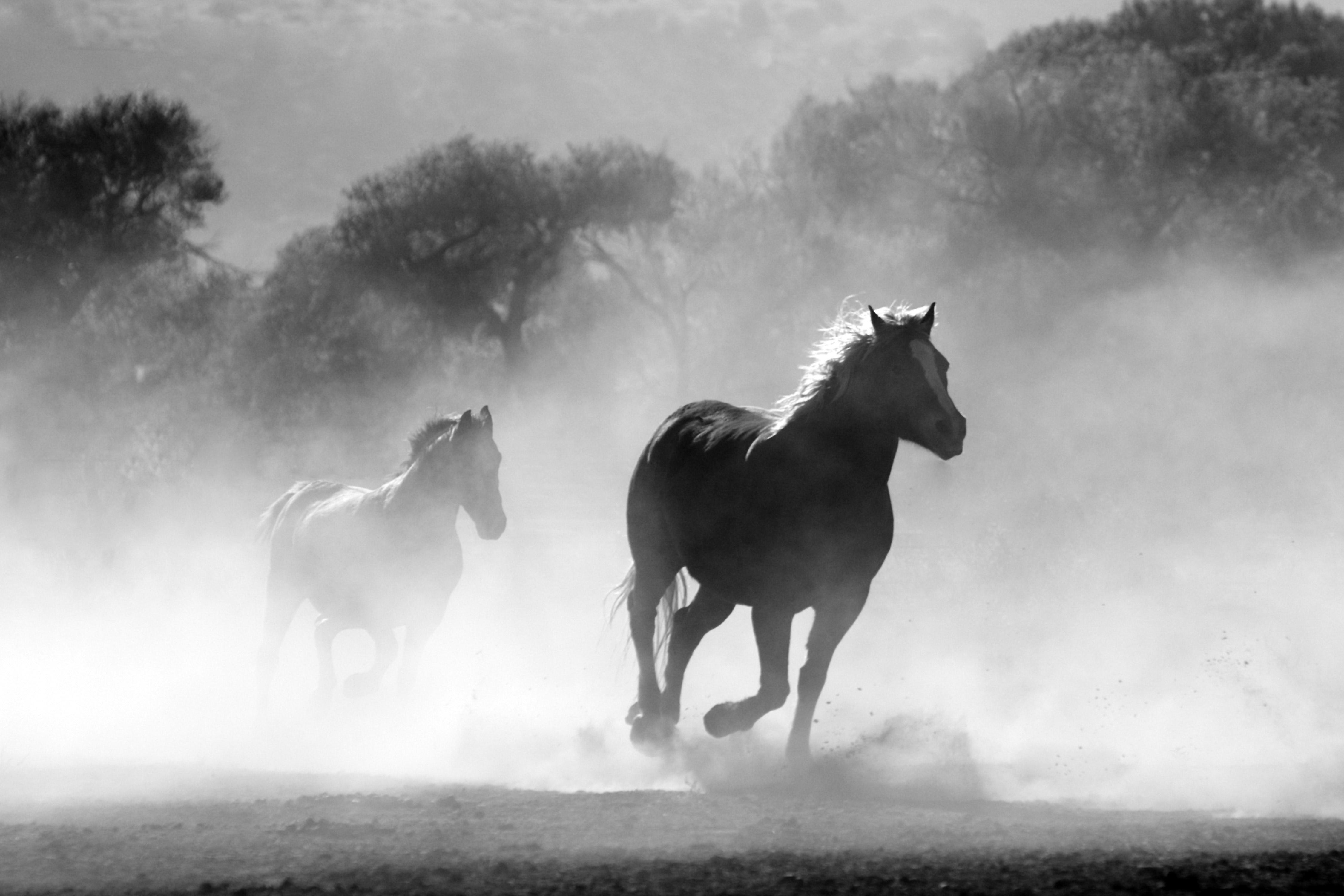 Les chevaux de Ben Ali