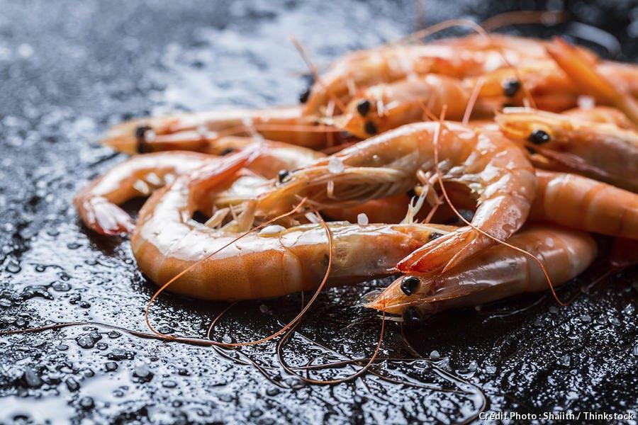 Les crevettes algériennes, par Chawki Amari