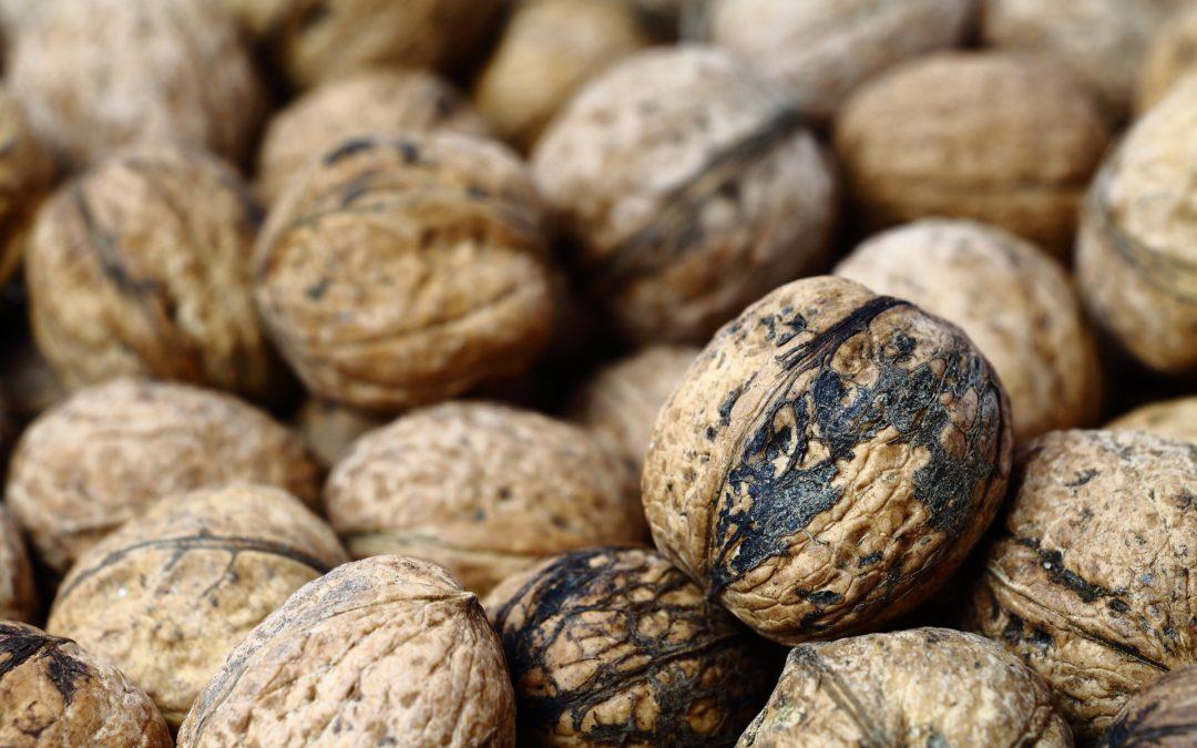 Les noix de Grenoble, par Jacques