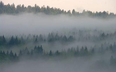 La petite amie et le brouillard, par Guy