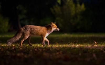 Le blaireau et le renard, par Constance