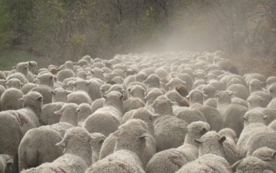 Le porteur de laine, par Sylvie