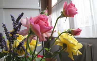 Les fleurs de l'écolier, par Nicole